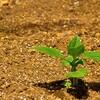 農業活動を行うメリット。健康や教育面の効果が高くコスパも良いです!