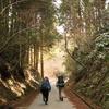【房総】照葉樹林の森を行く房総半島横断ハイク -Day2  ピークを越えて木を跨ぎ、物語の終幕へ-