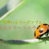 香川照之プロデュース「昆虫モチーフ」の子ども服が可愛い!