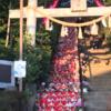 座間神社 77段 階段での「ひな祭り」!