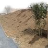 庭づくり 植栽-1