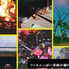 おすすめ!フィルムっぽい写真が撮れるiPhoneアプリ