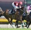11/23(土)の東京競馬場のレース予想 ~11Rは人気薄ウインシャトレーヌが熱い!~