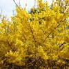 今日も春の彩を撮る