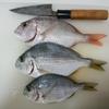 お魚料理♪ 小さなヘダイとチャリコ料理