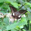 今日は「蝶」に逢えました(^o^)