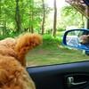 風が嫌いな犬、だけど車窓の魅力には我慢ができない模様
