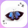ムラサキシジミ(紫小灰蝶)さんのご来店です (*•ω•*)