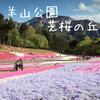 埼玉県秩父の【芝桜】今が見頃!  羊山公園おすすめ情報