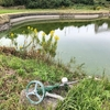 里池(兵庫県洲本)