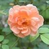 9月3日の庭より摘んだ花々飾る