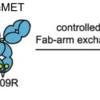 EGFR exon 20 insertion エクソン20挿入 治療薬開発:amivantamab、オシメルチニブ、ポジオチニブ、TAK-788