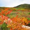 赤兎山紅葉