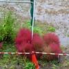 「佐久の季節便り」、連日の大雨、午後には上がって、「玉ねぎ」を定植…。