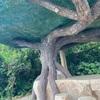 【来間島】松の木展望台(ガジュマル展望台)