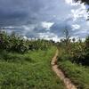 青年海外協力隊日記 page7 (ルワマガナを知ろう 41日目〜47日目)