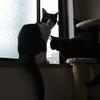 今日の黒猫モモ&白黒猫ナナ!動画の更新頻度は減るニャン♪