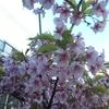 春を感じて