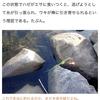 寄稿:川原に積まれた石の隙間に棒を突っ込んでハゼを釣る方法を学びたい