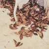枯葉の上を歩く音