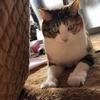 【愛猫日記】毎日アンヌさん#195