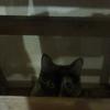 【第13回】はじめて○○へ行ってきた「猫カフェ」(行った店:『にゃんこいわ』)