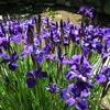 高幡不動尊と周辺の花