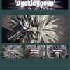 'Dyckiayouup' Web Shop