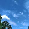 カッコウと春ゼミと青空