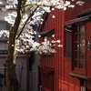 茶屋街の花見「主計町」(前篇)