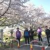 今週も桜満開!