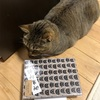 大きすぎるサイズの書置きの御朱印のためにMinneで見つけたKOEIDOさんにお願いしてA5の御朱印帳を作ってもらったヾ(*´∀`*)ノ