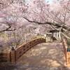 信州桜旅・その2