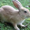 瀬戸内海に浮かぶウサギの楽園!大久野島潜入レポ