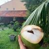 ココナッツのこと