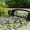 東京小石川後楽園『水連の浮かぶ内庭』