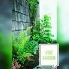 植栽 : 自生植物 = 5 : 4で共存するカーポート