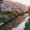 桜 2020 Vol.4