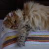 【ネコ】その枕は・・・