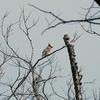 大阪城公園の野鳥 2020.3.3