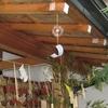 今夏も境内各所に風鈴を吊り下げております
