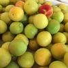 越生の梅でジャム作り