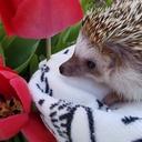 ハリネズミのティッたん    pettankohedgehog's diary