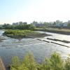 豊平川サイクリング ― 橋を眺める ―