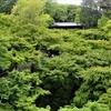 東福寺 新緑の美に包まれて