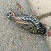 原因不明...ドイツで大量の鳥が道路に落下