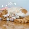 新型コロナワクチン翌日は愛猫とまったりおうち時間。