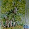 2017年:4月『樹を描く - ソテツと楠』