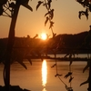 夕日と夕焼け、そして鳥と月‥