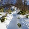 正月3日に冬の藻岩山に登って下山中に突き指した話